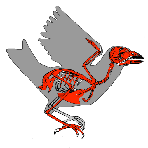 sparrow_skeleton.png